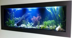 Aquariums in Cairns - Geraldton Accommodation