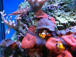 Tropical Marine Centre - Geraldton Accommodation