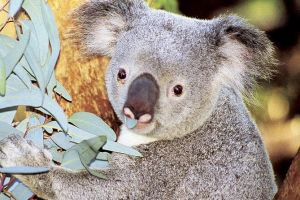 Perth Zoo General Entry Ticket and Sightseeing Cruise - Geraldton Accommodation