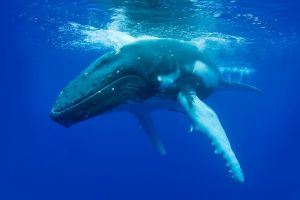 Dunsborough Whale Watching Eco Tour - Geraldton Accommodation